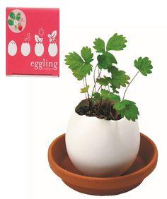 Crack And Grow Ceramic Egglings - Garden Grow Kit For Kids, Strawberry - Hearthsong Egg Shell Planters, Planter Pots, Garden Projects, Garden Tools, Garden Ideas, Strawberry Planters, Types Of Herbs, Fall Vegetables, Grow Kit