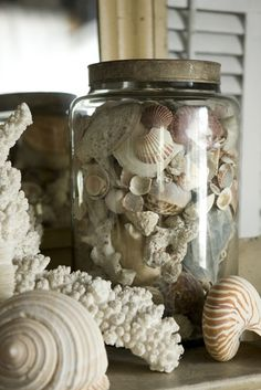 Every beach cottage needs a shell collection…even in the mountains the beauty of shells are something to behold…. Beach Cottage Style, Beach House Decor, Coastal Style, Coastal Decor, Coastal Living, Goin Coastal, Coastal Cottage, Cottages By The Sea, Beach Cottages