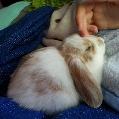 embracethebizarre:  monday morning cuddle sessions   loves being petted