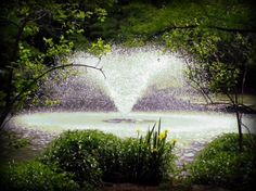 Botanical Garden 05/2011