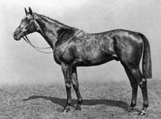 Royal Minstrel(1925)(Colt) Tetratema- Harpsichord By Louvois. 5(C)x5(C)x5(F)x5(F) To St Simon. 5 Wins 5 Seconds. Won St James's Palace S(Eng), Craven S(Eng), Eclipse S(Eng), Victoria Cup(Eng), Cork & Orrery S(Eng), 2nd 2000 Guineas(Eng), Eclipse S(Eng), Sussex S(Eng), July Cup(Eng), Nunthorpe S(Eng). Died In 1940.