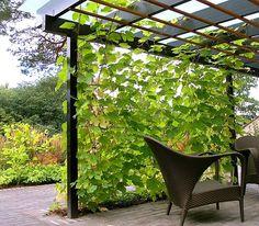 Har man smalt utrymme men vill ha häck/något grönt som avskiljare så kan man sätta upp en spaljé med klätterväxter.