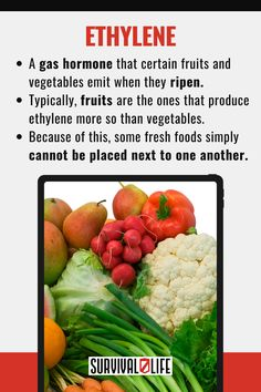 Storing food, especially fresh fruits and vegetables, is often equated simply with putting them all in one fruit bowl or together in the fridge. However, there are actually some foods that you should never store next to one another. Here are some of them. #foodstorage #foodkeeping #survivalhacks #survivaltips #survival #preparedness #survivallife Food Storage Organization, Food Storage Containers, Long Term Food Storage, Life Guide, Fresh Fruits And Vegetables, Survival Tips, Food Hacks, Good Food, Things To Come