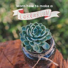 A gorgeous video tutorial showing you how to create a cute succulent terrarium.