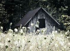 Barn with Queen Anne's Lace, rustic photo. would love to travel Ontario and take pics of old barns! Country Barns, Old Barns, Country Life, Country Living, Country Cottages, Country Charm, Country Roads, Carolina Do Norte, North Carolina