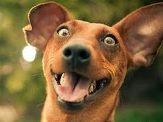 """*""""My Favorite Thing:"""" Dog/Cat Diaries. (Hilarious!) The joy of a happy dog is a lesson for me and all of us. The Cat's Diary is a great example of the negative view of life to which we can all fall prey.  (Click image to view entire post.) #dogs   #humor   #cats"""