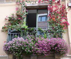 Taormina - Flowered balcony by Luigi Strano FDV, via Flickr. So charming.
