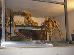 Ursus Spelaeus cave bear Cave Bear, Fossils, Painting, Art, Art Background, Painting Art, Kunst, Fossil, Paintings