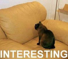 You've often become freaked out because your cat will stare intently at NOTHING for whole minutes.