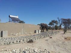 Un éléphant boit dans les toilettes video  2Tout2Rien