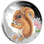 Tuvalu 2013 50 cents Red Squirrel Forest Babies  1/2oz Proof Silver Coin Presentation Cards, Australian Bush, Gold And Silver Coins, Red Squirrel, Proof Coins, Big Star, Coin Collecting, Precious Metals, Gallery