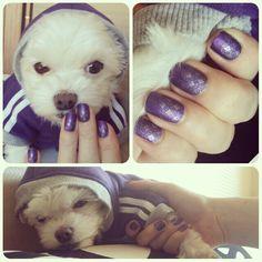 Some purple adidas style   #dogclothes #nails #nailart #nailstamping #matchingmydog #maltesedog #dog