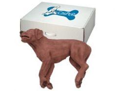 Casper CPR Dog