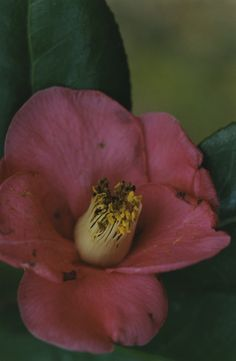 #MISAKI 2003-2 Contemporary Photography, Flora, Still Life, Bouquet, Jasper, Garden, Plants, Shells, Pictures