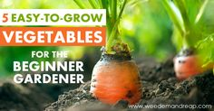 Vegetables can be difficult to grow the first. Here's my guide for new members of the Vegetable Gardening Fan Club!