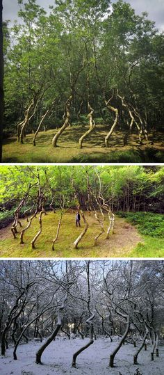 Ash Dome: A Secret Tree Artwork in Wales Planted by David Nash in 1977