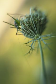 High up by Andrea  Gulickx on 500px Lensbaby Muse