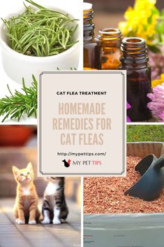 Our selection of cat flea treatment options makes flea control manageable, eradicating the fleas in your home and on your pet. Flea Treatment, Cat Fleas, Your Pet, Remedies, Pet Tips, Pets, How To Make, Animals And Pets