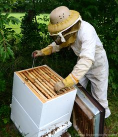 Even if you love your bees and mean well, there are some things that you do that could be hurting them. Avoid causing bees harm with these tips.