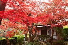 Suiran, a Luxury Collection Hotel, Kyoto - Hotel Exterior - Rendering