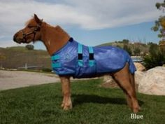 Kensington Mini Polymax Fly Sheet by Kensington. $49.60. Adjustable belly band. Keeps your horse cooler. Protects against insect bites. Lightweight & breathable fly sheet. Detatchable leg straps. A Lightweight- Ultra-breathable PolyMax Fly Sheet now featured in mini sizes! This fly sheet not only keeps your mini cooler, but offers great comfort from biting insects. Its features include an adjustable belly band and detachable elastic leg straps for a comfortable fit