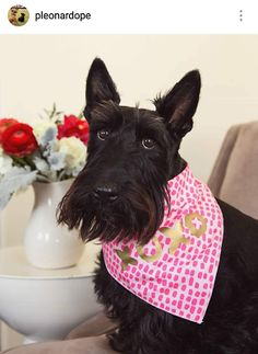 Scottie Mom: Scottish Terriers of Instagram