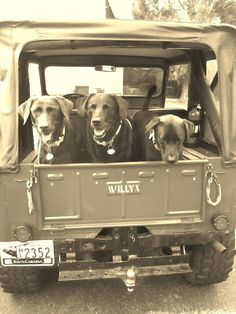my two favorite things.. labs and jeeps :) 1953 Willys CJ-3B - Photo submitted by Daniel Nagurney.