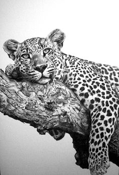 Leopard mit Bleistift an Bord gemacht. – Nihal Ceylan – Join the world of pin Pencil Drawings Of Animals, Animal Sketches, Realistic Drawings Of Animals, Beautiful Cats, Animals Beautiful, Cute Animals, Wildlife Paintings, Wildlife Art, Cat Drawing