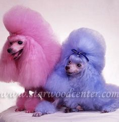 Dog Hair Dying -- Extreme Dog Grooming #Dog #Grooming