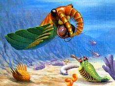 Artist recreation of Burgess Shake fossil