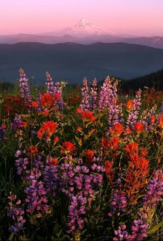 Hill with a view - These are flowers and that is Mt Hood! By Henrik Anker Bjerregaard Lundh iii. Aesthetic Backgrounds, Aesthetic Iphone Wallpaper, Aesthetic Wallpapers, Nature Aesthetic, Flower Aesthetic, Aesthetic Photo, Photo Wall Collage, Picture Wall, Pretty Pictures