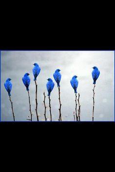 Lyn Hammond Artist loves #Blue birds