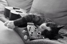 Uke players love cats and cats love ukes . . .My kitty plays the ukulele Jimi Hendrix style with her teeth ha ha ha