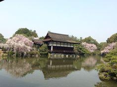 ☆共和AMELのお花見☆ 京都平安神宮のしだれ桜が満開です! 神社仏閣と美しいしだれ桜の コントラストが印象的! そういえば、古今集で在原業平が 詠んだ句を思い出しました! 「世の中に絶えて桜のなかりせば 春の心はのどけからまし」 まさにそんな感じの風景でした^O^ <URL> http://www.kyowayakuhin.co.jp/