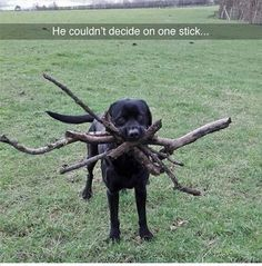 25+ Viral Animal Photos That You Will Find Adorable