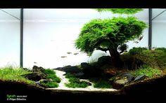 underwater bonsai fish tank.