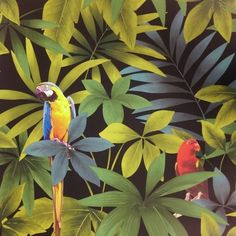 Direct Wallpapers Direct Rainforest Jungle Songbird Parrot Motif Leaf Pattern Wallpaper J86404