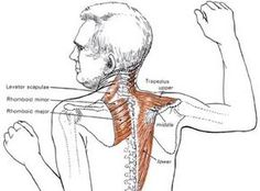"""Archery Muscle Power >>prevent injuries, improve accuracy, and become a """"lucky"""" bowhunter Neck And Shoulder Exercises, Neck Exercises, Neck And Shoulder Pain, Shoulder Workout, Neck Stretches, Health And Beauty, Health And Wellness, Fitness Diet, Health Fitness"""