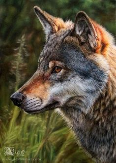 Wolf by Azany on DeviantArt - pastel drawing #Wolf #AnimalArt #Art