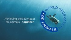 Convention On Biological Diversity, Animal Rights Movement, Animal Protection Organization, World Animal Protection, United Nations Environment Programme, Mercy For Animals, We Are All Connected, Environmental Health, Create Awareness