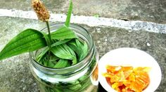 Anna Christensen on Skin Care: Granny's Plantain Cough Syrup. My Favorite Food, Favorite Recipes, Cough Syrup, Healing Herbs, Kraut, Health And Nutrition, Healthy Habits, Pickles, Cucumber