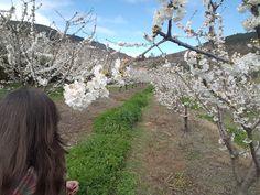 Passeio até às cerejeiras do Fundão, Portugal | Viaje Comigo