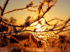 Snow Crystals Up close...  a snowy sunrise by MonicaPhotoMagic, $32.50