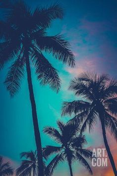 Retro Sunset Hawaii Palm Trees Photographic Print by Mr Doomits at Art.com