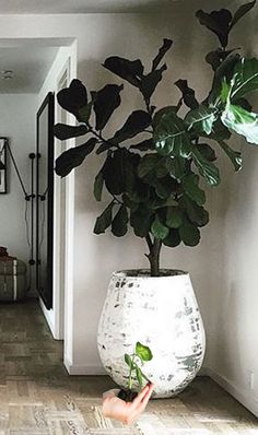 37 Best Indoor Plants Decoration to Copy Right Now Most plants don… 37 Best Indoor Plants Decoration to Copy Right Now Most plants don't require direct sunlight and water daily. A wonderful solution can be to just get an indoor plant. Best Indoor Plants, Outdoor Plants, Indoor Trees, Indoor Plant Pots, Indoor Planters, Diy Planters, Garden Planters, Outdoor Gardens, Plantas Indoor