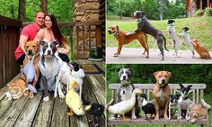 Meet the couple with SEVEN rescue animals, including two DUCKS