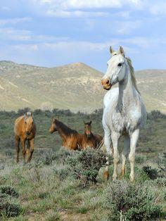Image from the Great American Horse Drive, Sombero Ranch, Craig, Colorado USA (C)Michael Huggan Photography