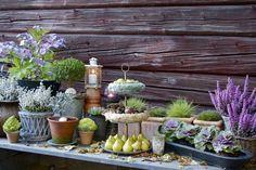 Őszi kerti szépségek   Dekorella Shop akció (15-20edvezmény)