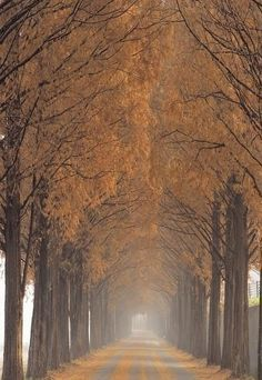 #my future destination <3 | Nami Island, Korea