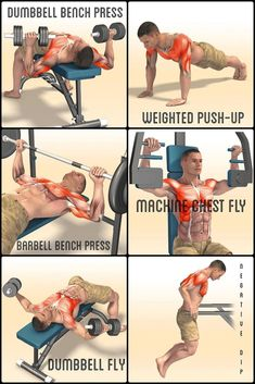 10 Best Chest Exercises For Building Muscle Want to build bigger pecs? If you want strong, powerful, and defined pecs that pop, you want to do these chest exercises and workouts. Whether you've got. Gym Workout Tips, Weight Training Workouts, Dumbbell Workout, Training Tips, Workout Women, Chest Workout For Men, Chest Workouts, Chest Exercises, Yoga Pilates